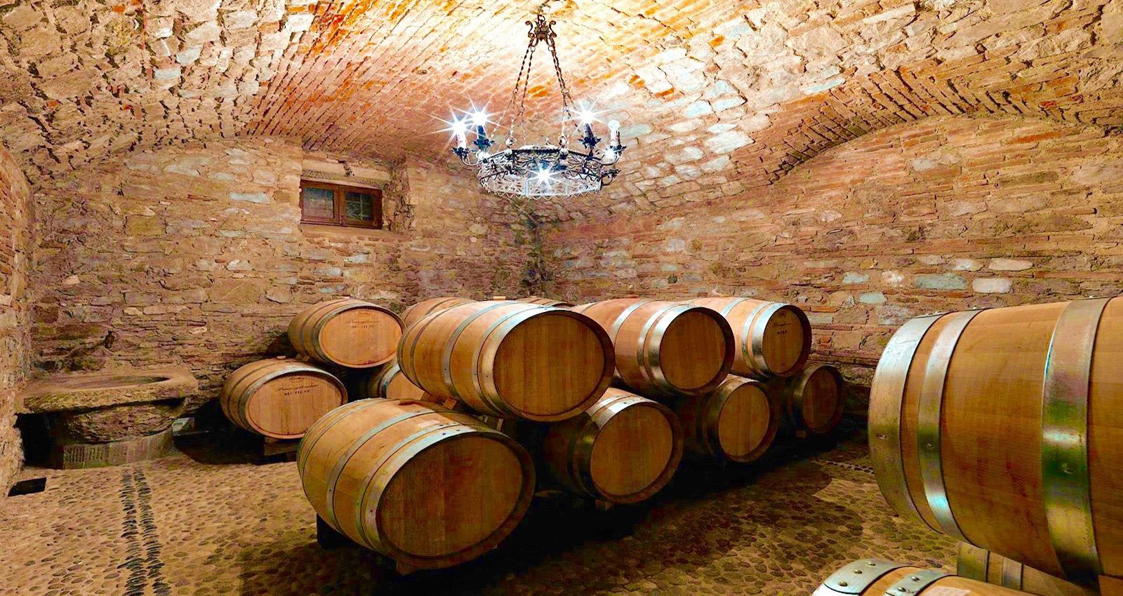 Degustazione vino e olio di oliva